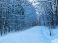 Winter-Trail